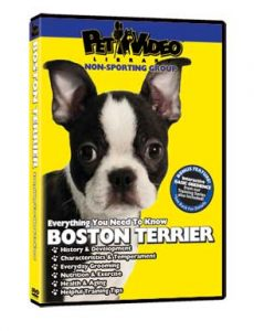 Boston-Terrier.jpg