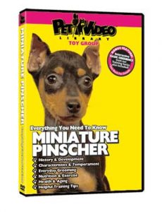 Miniature-Pinscher.jpg