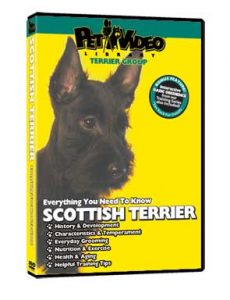 Scottish-Terrier.jpg