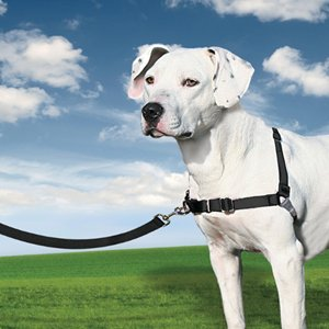 Easy20Walk20Harness.jpg