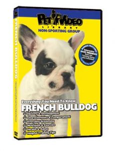 French-Bulldog.jpg