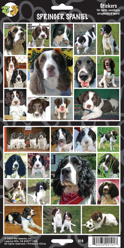 enlishSpringerSpanielTemplate.indd