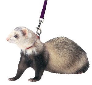 ferret20harness.png